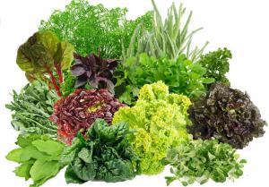 salat-iz-zeleni-