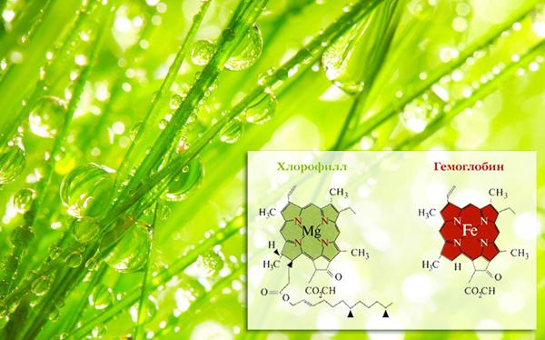 Chlorophyll-Hemoglobin2