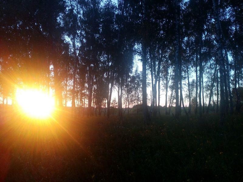 солнце в БР klein