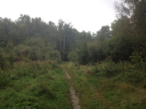 Лесной покой