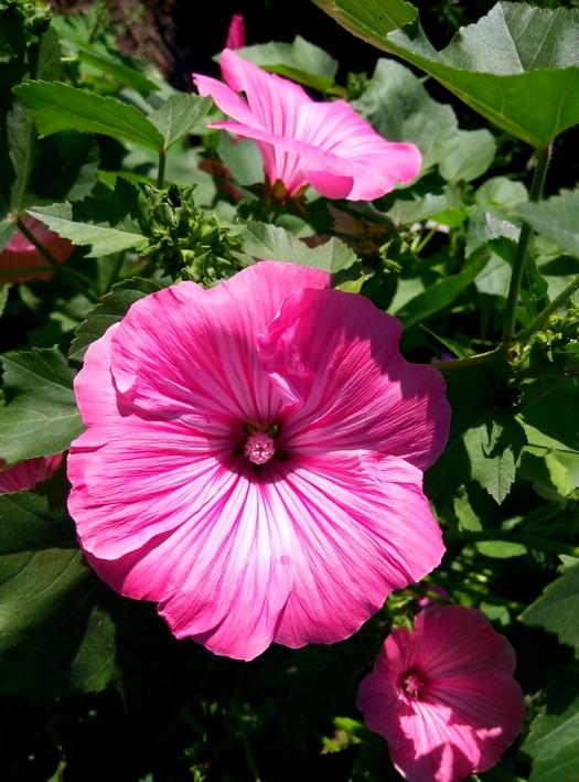 karina_flowers_10