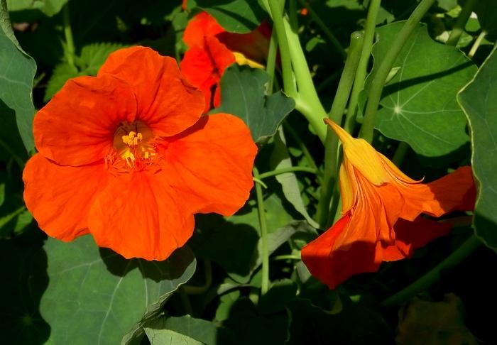 karina_flowers_12