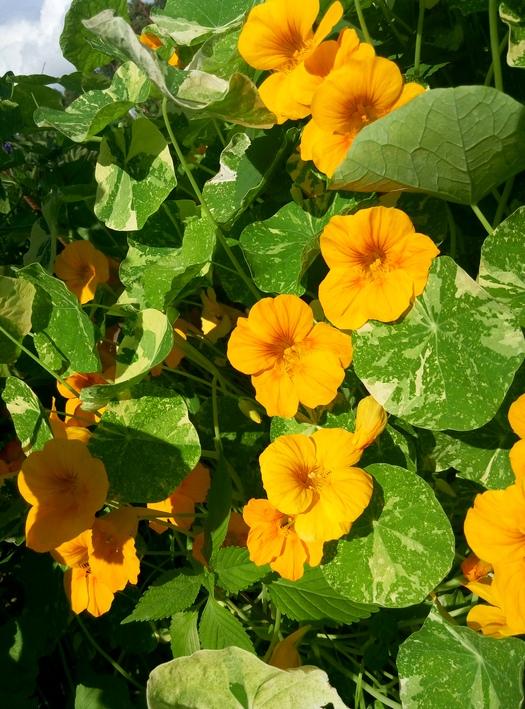 karina_flowers_13