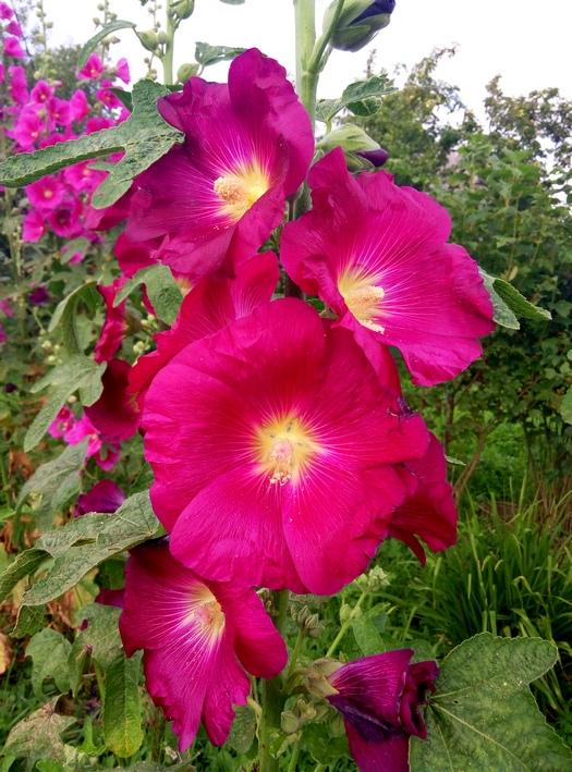 karina_flowers_16