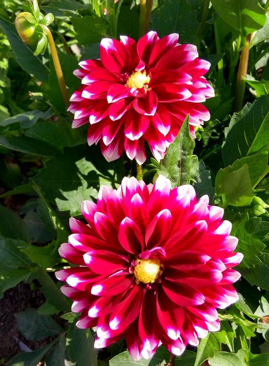 karina_flowers_4