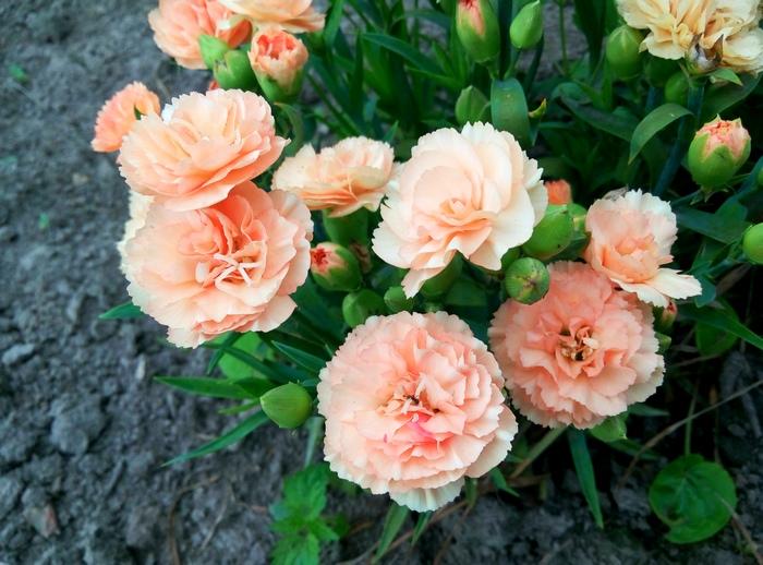 karina_flowers_5-1