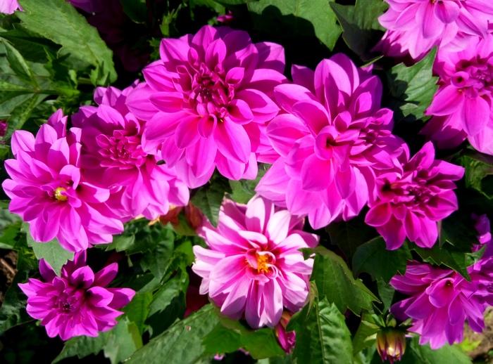 karina_flowers_5