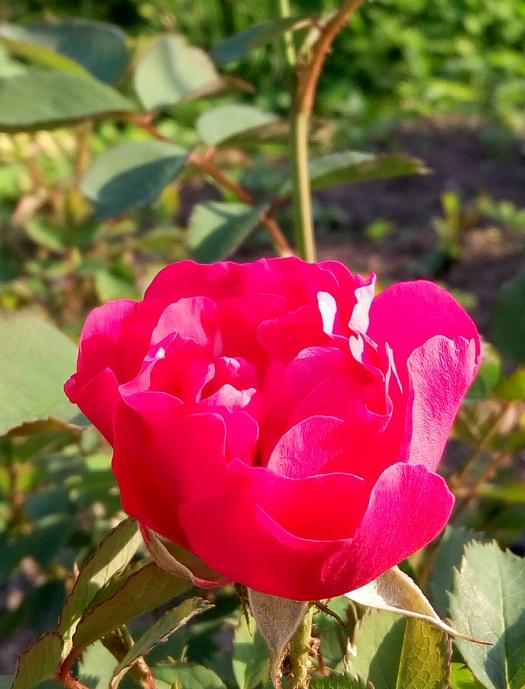 karina_flowers_7